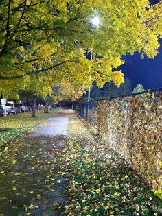 Illinois in the Fall. by Elizabeth Delacruz, via Flickr Illinois, Country Roads, Apps, River, Photo And Video, Iphone, World, Fall, Outdoor