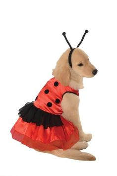 Rubie's Pet Costume, Small, Ladybug Dress Rubie's https://www.amazon.com/dp/B00C6UXY4Q/ref=cm_sw_r_pi_dp_x_g7qPxb0R825XJ