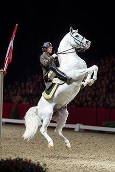 The Spanish Riding School Courbette