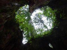 Yakushima Island. Looking for more information about Kagoshima? Go Visit Kyushu Tabi net. http://www.welcomekyushu.jp/