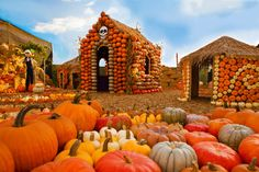 Pumpkin House Village at Mr. Bones Pumpkin Patch in Culver City, Los Angeles. Since 1987 Mr. Bones has been delighting the families of Los Angeles. Mr Bones Pumpkin Patch, Pumpkin Patch Farm, Best Pumpkin Patches, Fall Pumpkins, Halloween Pumpkins, Fall Halloween, Halloween Treats, Happy Halloween, Pumpkin Patch Pictures