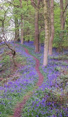 I remember the wonderful smell of these blue-carpeted bluebell woods on the Lickey Hills in Worcestershire, England. Beautiful World, Beautiful Places, Beautiful Pictures, Forest Path, Walk In The Woods, Parcs, English Countryside, Nature Images, World Best Photos