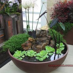 Pretty Water Feature for small space.