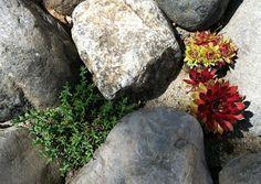 ...en hverdagsblogg...: Plantene i steinbedet Landscaping, Texture, Plants, Surface Finish, Yard Landscaping, Plant, Landscape Architecture, Garden Design, Planets