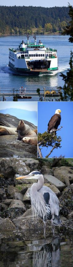 Here in Washington State you will find the San Juan Islands. Access to the islands is via ferry, and that experience is an adventure in and of itself — from the stunning archipelago landscape scenery to wildlife watching of porpoises, sea lions, eagles and if you are lucky, a pod of majestic Orca whales.
