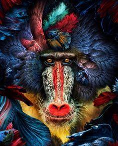 Illustrations Discover Life is art live yours in color . Lion Wallpaper, Animal Wallpaper, Bird Artwork, Elephant Art, Baboon, Yoga Art, Surreal Art, Marcel, Art Pictures