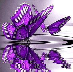 Purple butterfly water ripple color splash detail photography