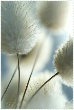 Image shared by Kati. Find images and videos about white, nature and flowers on We Heart It - the app to get lost in what you love. Foto Macro, Beautiful Flowers, Beautiful Pictures, Beautiful Beautiful, Exotic Flowers, Nature Pictures, Purple Flowers, Fotografia Macro, All Nature