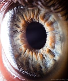 Close up of the human eye. You can see the fibers that are manipulated by the ciliary muscles to direct light through the lens to the retina