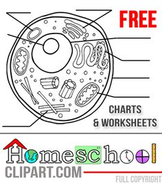 Homeschool Clipart —