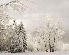 Fine Art Photography Snow Art Winter Art Snow Landscape Art Photography 8x10 Fine Art Photograph