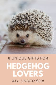 Looking for a unique present for someone who loves Hedgehogs? Check out these eight gift ideas that a Hedgehog lover will treasure...and they're all under $30. Hedgehog Names, Funny Hedgehog, Cute Hedgehog, Unique Presents, Unique Gifts, Colorful Succulents, Cute Gifts, Monthly Planner, Appointments