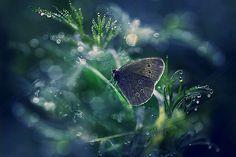 *Butterfly in a Dew Drop Garden