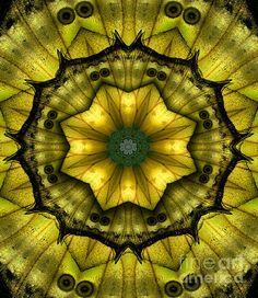 Gorgeous abstract design I created from an extreme closeup of a yellow African butterfly wing. It reminds me of a stained glass window (called a rose window) you'd find in a medieval church. Image is for sale - on canvas, as a greeting card, as a framed print, etc. from my printing service. Just click the picture and you'll be taken to the shopping cart on Fine Art America.