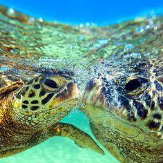 #hawaii #clarklittle