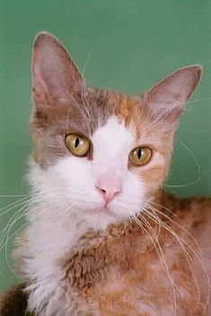 If you are thinking about getting a cat or kitten, please visit your local shelter or SPCA first. Or click the links below to find adoptable pets in your area. Petfinder.com adoptapet.com There are...