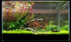 Fallen Tree Branch (jungle mode) - Page 6 Aquarium Garden, Betta Aquarium, Nature Aquarium, Planted Aquarium, Nano Cube, Growing Gardens, Aquarium Design, Paludarium, Fish Ponds