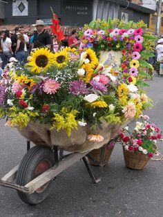 Different Kinds Of Flowers, Classroom Design, Garden Tools, Planter Pots, Floral Wreath, Htm, Plants, Gardens, Google