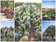 Mountain Bounty Farm CSA | Outside Inn Blog for Nevada City, California