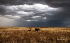 Life on the Plains - Southern Plains Photography