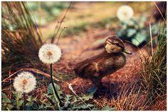 Sweet little duckling.