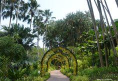 Découvrez le merveilleux Jardin Botanique de Singapour, avec Mots et Curiosités #voyage #asie