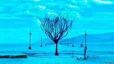 """""""A tree sculpture and avenue shot 15 years ago in Black Rock Desert, Nevada. Early morning of the last day of the Burning Man event. The last film in the bag was tungsten."""" Daniel Furon"""