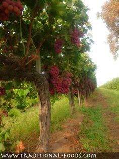 (1) Facebook Grape harvest in central California
