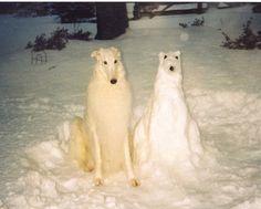 Mychtar and his Snowdog by Ferlinka Borzoi (Deb West), via Flickr