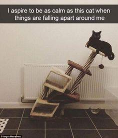 23 Hilarious Snapchats Capturing Cats During Precious Moments
