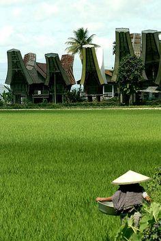 Toraja Rice Field Awsome Pictures, Dutch East Indies, World 7, Borobudur, Largest Countries, Paradise Island, Medan, Archipelago, Southeast Asia