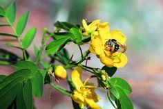 Emerald Botanical Gardens - macro of bee / wasp