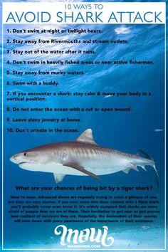 Maui Shark Info   Sharks in Maui, Hawaii   Tiger, Reef, Mako, Bull