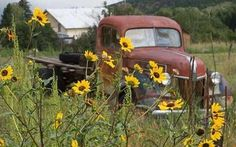 Love the old trucks and pretty wildflowers!