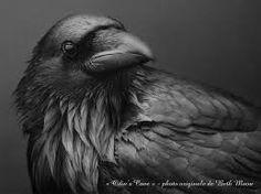 Résultats de recherche d'images pour « corbeau fresque chinoise »