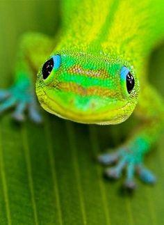 GREENY LIZARD - kind of a cute little guy! :)