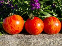 Over 1800 varieties of Vegetables, Rare Flowers & Herbs. Non-GMO open pollinated seeds. Colorful Vegetables, Seeds Online, Rare Flowers, Farm Gardens, Garden Seeds, Tomatoes, Herbs, Fruit, Strange Flowers