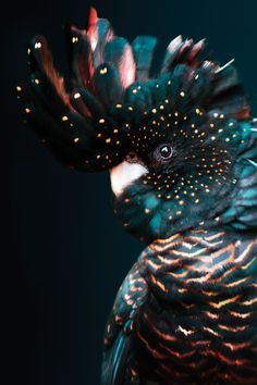 Poster of a Kleurrijke Kaketoe Papegaai. The image is made from aluminum / Plexiglas / canvas / Dibond / HD steel / paper The Efficient. Polo Sul, Polo Norte, Art Cobra, Beautiful Birds, Animals Beautiful, Animals And Pets, Cute Animals, Animal Wallpaper, Art And Illustration