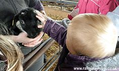 The benefits of farm trips for babies including language development and encounters with animals