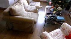 hom alone ;)  #cat #cats