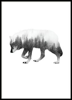Forest Wolf B & W, Poster in the group Posters / Formats / at Desenio AB Source by annesophiepasto Tatoo Nature, Poster Collage, Poster Prints, Desenio Posters, Wolf Poster, Natur Tattoos, Wal Art, Forest Tattoos, Plakat Design