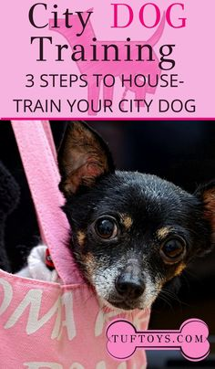 Dog Behavior Do you have a city dog? Here are 3 steps to house train your dog in the city. Agility Training For Dogs, Best Dog Training, Dog Agility, Training Videos, Dog Dna Test, Dog Commands, Puppy House, Dog Behavior, Best Dogs