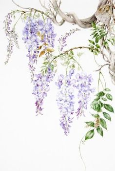 watercolor painting of wisteria Watercolor And Ink, Watercolor Flowers, Watercolor Paintings, Art Floral, Art Mur, Art Folder, Art Japonais, Wisteria, Art Sketchbook