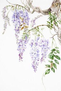 watercolor painting of wisteria Watercolor Flowers, Watercolor Paintings, Watercolour, Garden Mural, Art Mur, Art Folder, Art Japonais, Botanical Prints, Asian Art