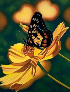 Costa Rica Butterflies | Butterflies, Moths and Caterpillars / Costa Rica Butterfly by Janet ...