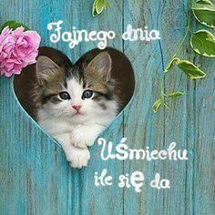 Good Morning Greetings, Good Night, Clip Art, Humor, Animals, Internet, Life, Frases, Trust God