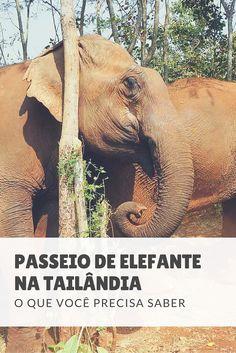 Fazer um passeio de elefante na Tailândia é uma das principais atrações turísticas do país, mas esconde uma dura realidade de maus tratos. Saiba mais aqui.