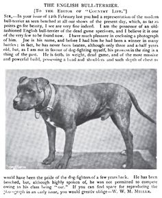 Uplifting So You Want A American Pit Bull Terrier Ideas. Fabulous So You Want A American Pit Bull Terrier Ideas. Staffordshire Bull Terriers, English Bull Terriers, Bull Terrier Dog, American Staffordshire, American Pitbull, American Bulldogs, Dog Games, Pit Bull Love, Vintage Dog