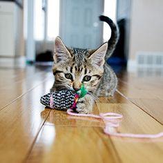 Eco-friendly Cat Toys