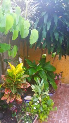 Mi jardin!